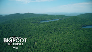 trees trees and more trees - aerial view of a forest