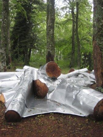 horizons rencontres arts nature 2012 massif du sancy