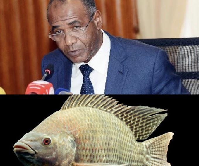 Angola gastou 50 milhões de dólares para importar Cacusso em 2019