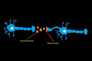 Funcionamiento de los neurotransmisores en la comunicación de las neuronas