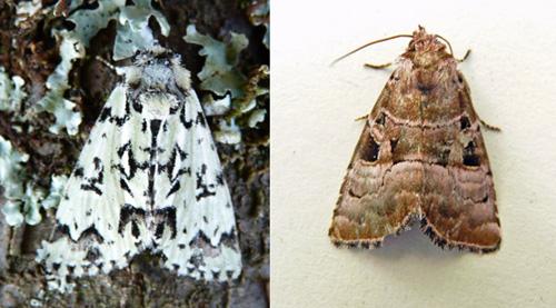 two owls blog la brenne 3 moths. Black Bedroom Furniture Sets. Home Design Ideas