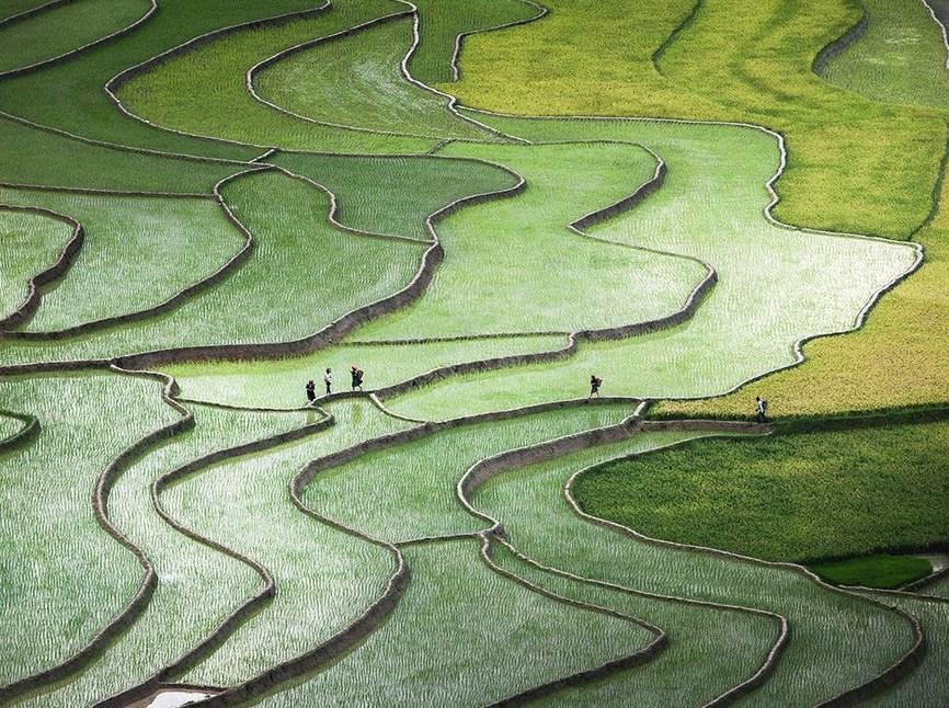 Fotografi Landscape dengan tema Sawah Tropis di Katulistiwa SAWAH LUAS