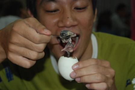 agen-gaple-telur-janin-bebek-di-filiphina
