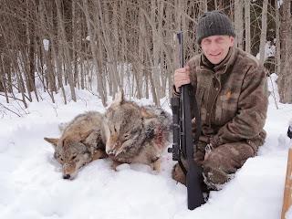 Регулирование численности волка