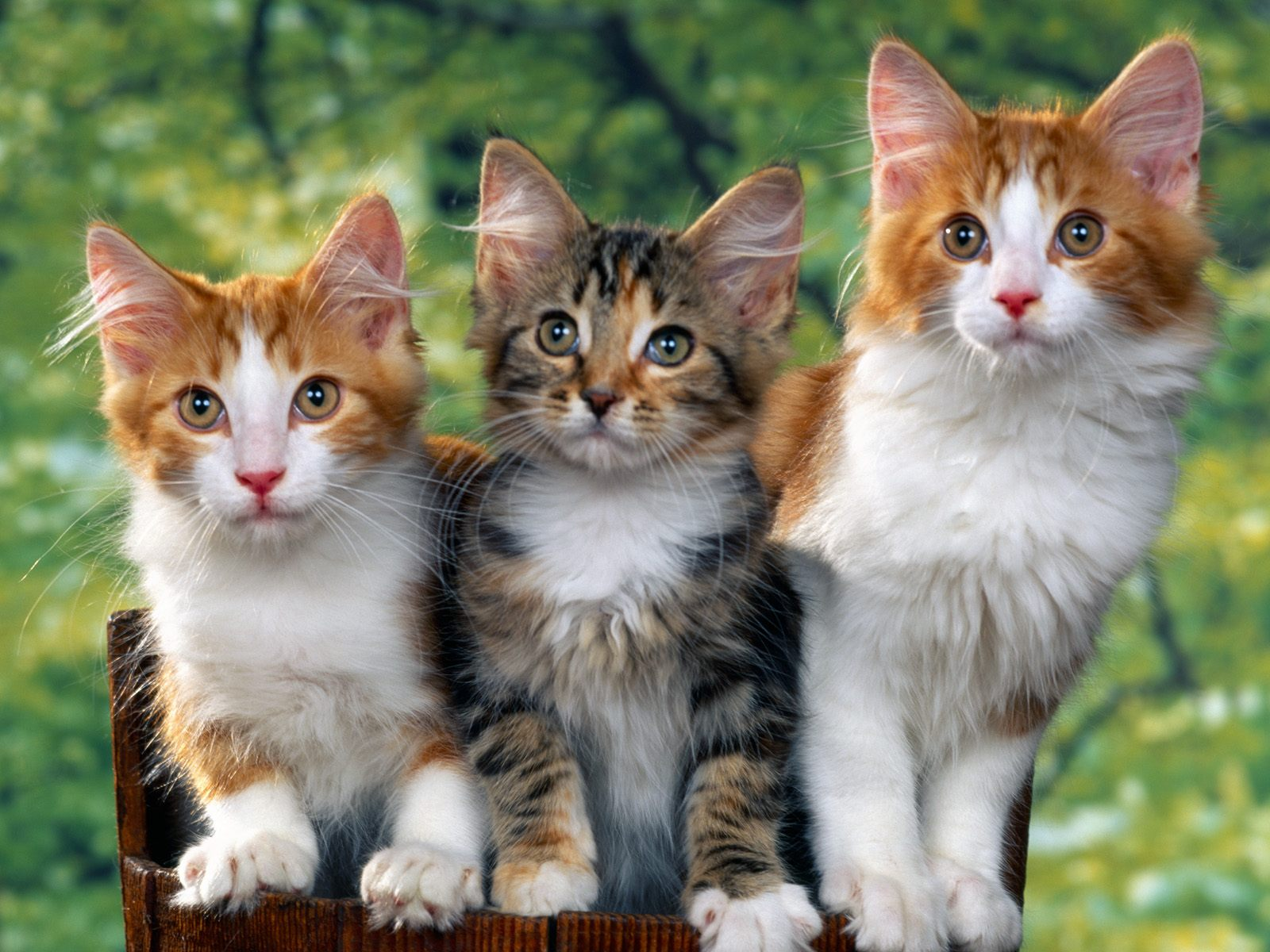 Download Wallpaper Gambar Kucing Lucu Kumpulan Wallpaper