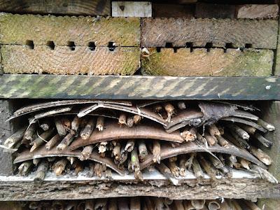 Bug hotel Cutting back perennials Green Fingered Blog