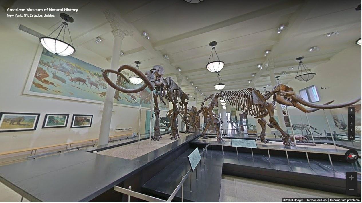 Museu Americano de História Natural - EUA