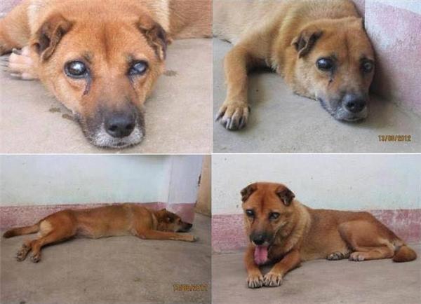 Chú chó mù 5 năm canh mộ chủ ở Việt Nam