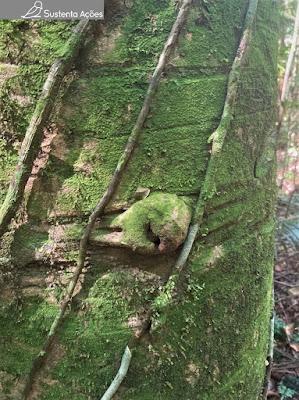 Nó de árvore