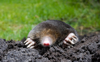 Moles dream meaning