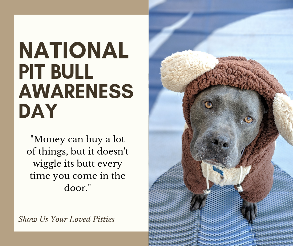 National Pit Bull Awareness Day Wishes