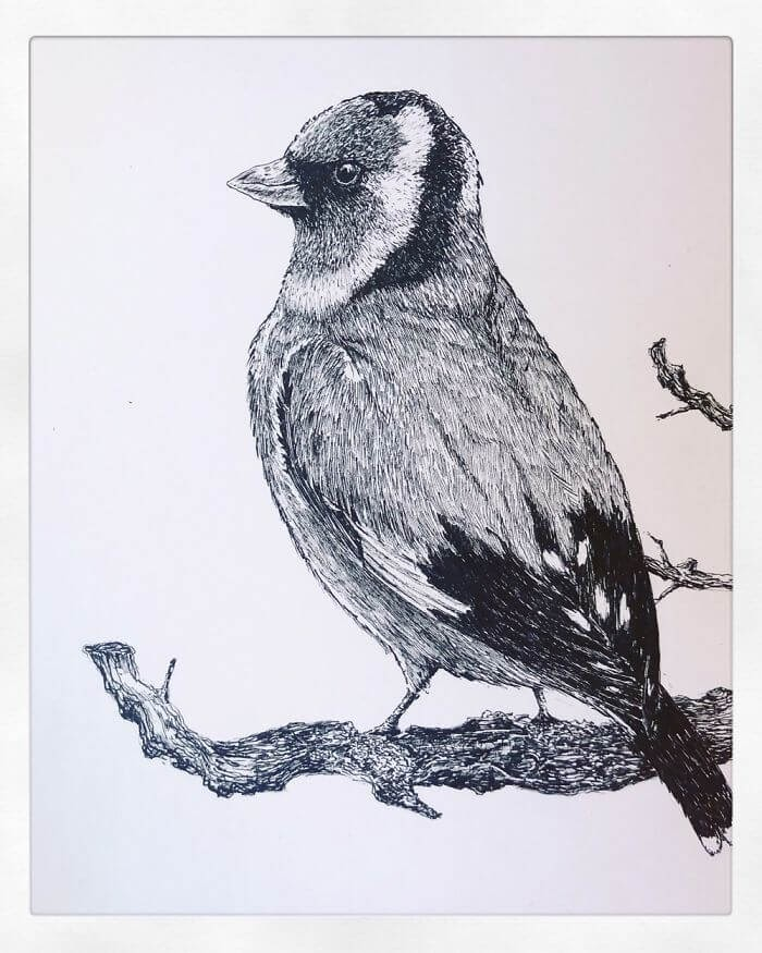02-Goldfinch-Bas-Geeraets-Black-and-White-Drawings-of-Birds-www-designstack-co