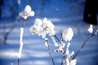 Tuyết trắng