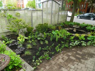 Summerhill Toronto New Front Shade Garden Makeover After by Paul Jung--a Toronto Organic Gardener