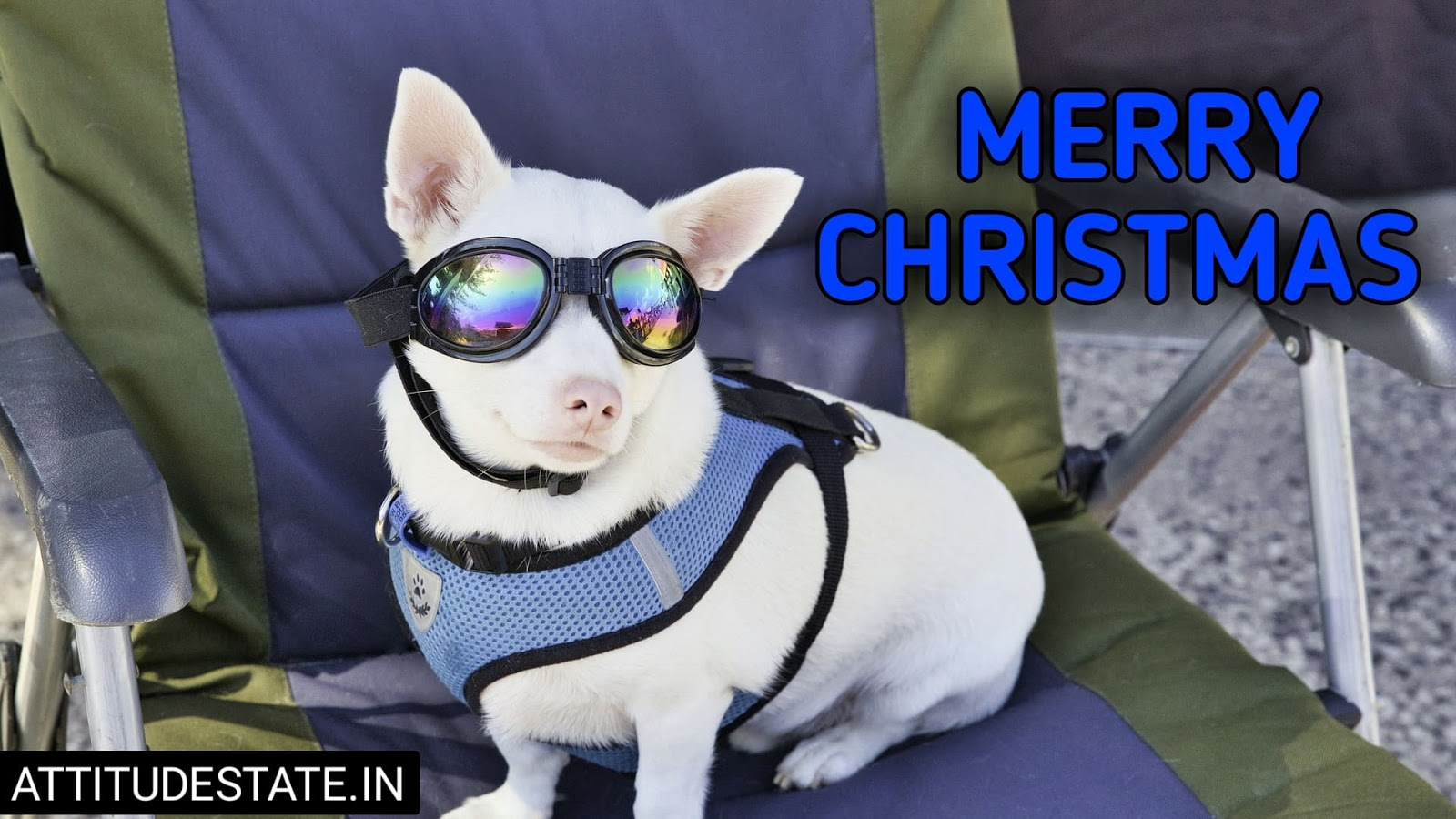 funny pictures of merry christmas