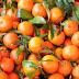 Jeruk Cina dan Madu Manfaatnya Bagi Jantung