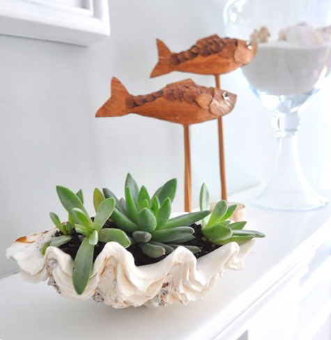 clam shell succulent planter on mantel