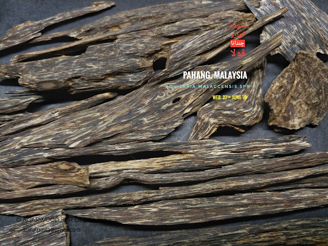 Regular type of quality Agarwood from Malaysia.