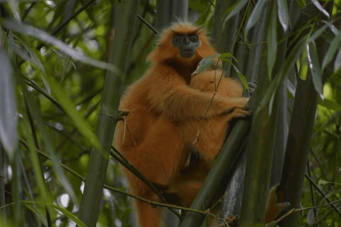 Raimona-National-Park-Best-Tourist-Destinations-in-Assam