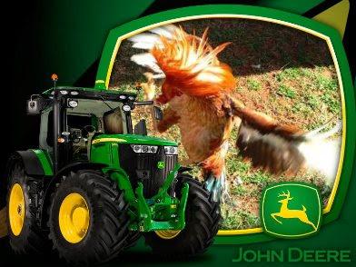 imagen de gallo de pelea