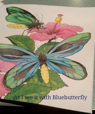 Butterfly adult coloring Usborne
