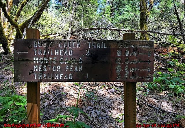 Buck Creek Falls Hike Washington