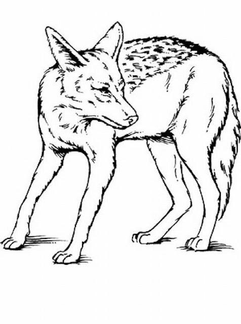 lupo, animali, foresta,