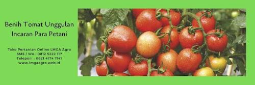 Daun tomat, buah tomat, manfaat tomat, jual benih tomat, toko pertanian, toko online, lmga agro