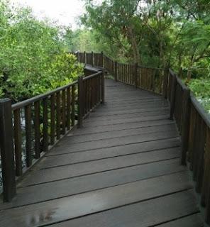 Hutan Mangrove Surbaya