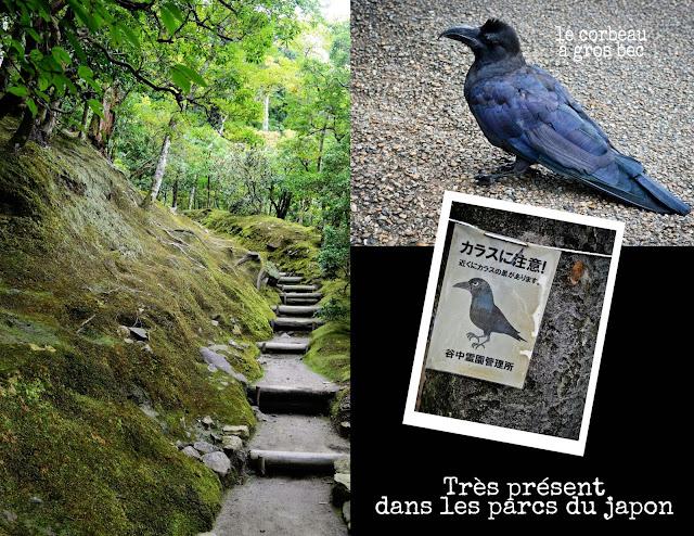 corbeaux-à gros-bec, japon,kyoto,blog,blogue,anthracite-aime