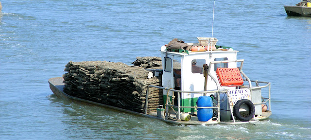 Oyster boat, Bourcefranc-le-Chapus. Charente-Maritime. France. Photo by Loire Valley Time Travel.