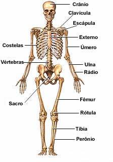Conociendo mas sobre anatomia - 1 3