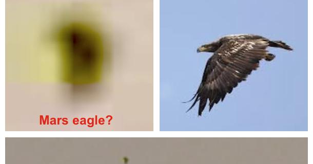 UFO SIGHTINGS DAILY: Giant Bird In Flight On Mars Caught ...