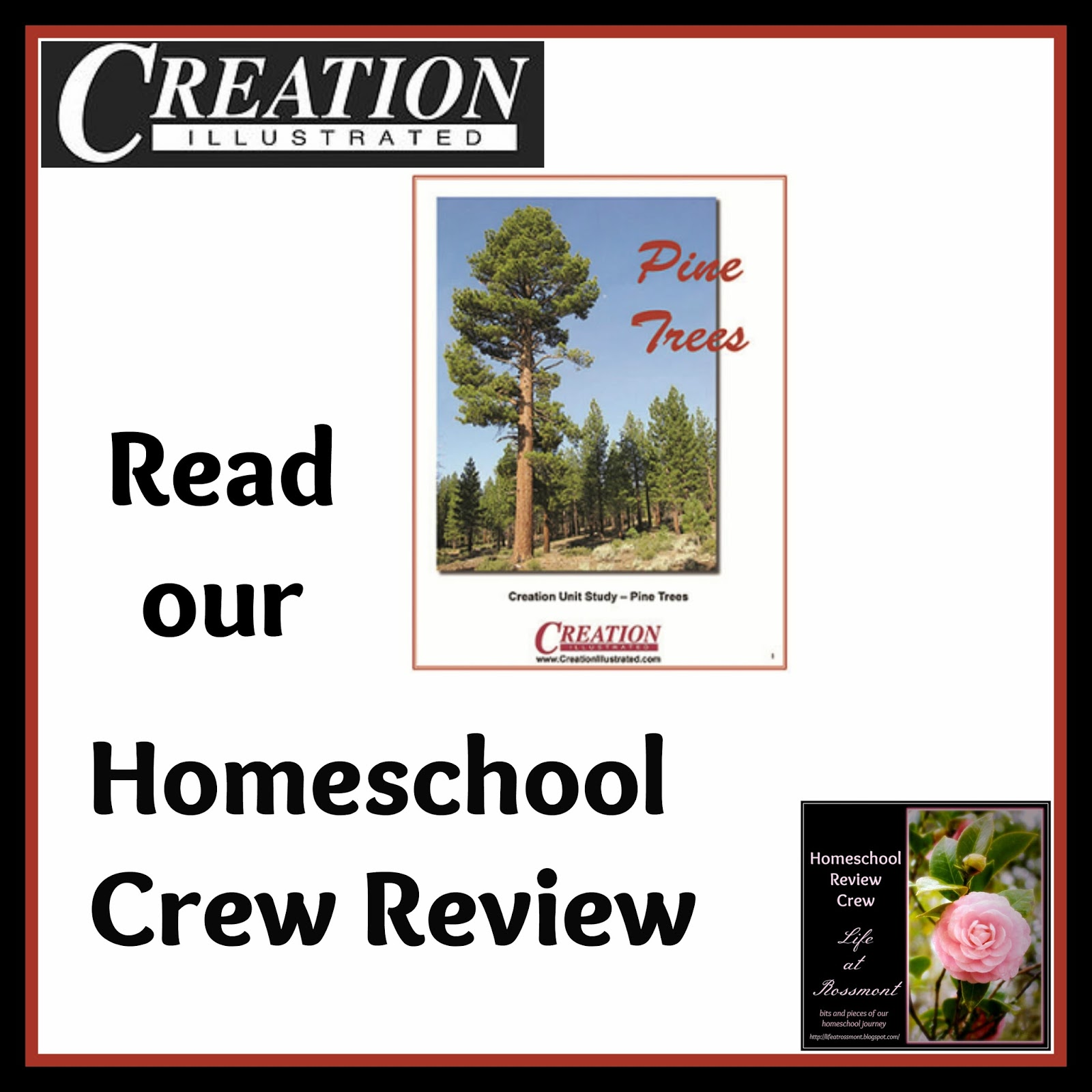 Life At Rossmont Creation Illustrated Pine Trees Unit