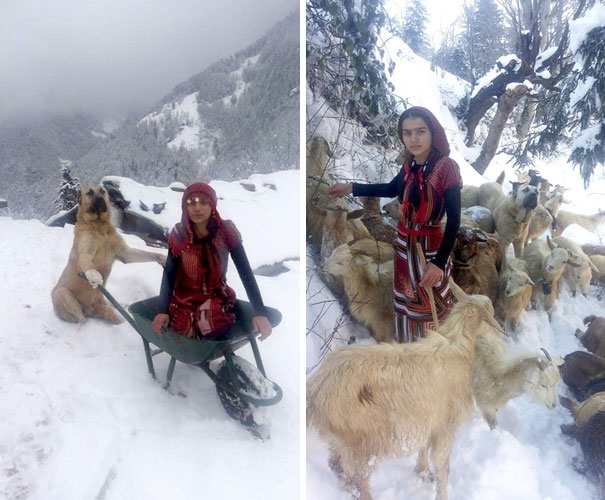 This Girl And Her Dog Just Saved A Mom Goat With Her Baby, And It's The Sweetest Thing You'll See Today - The girl took the mother goat on her back, and put the baby in Tomi's backpack