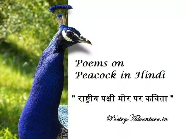 Poem on Peacock in Hindi, Peacock Par Kavita, Poem on National Bird in Hindi, राष्ट्रीय पक्षी मोर पर कविता, मयूर पर कविता