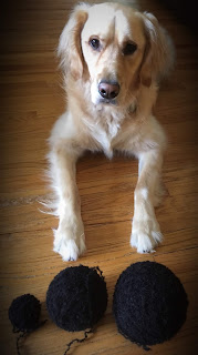 Dog wants to play with yarn balls