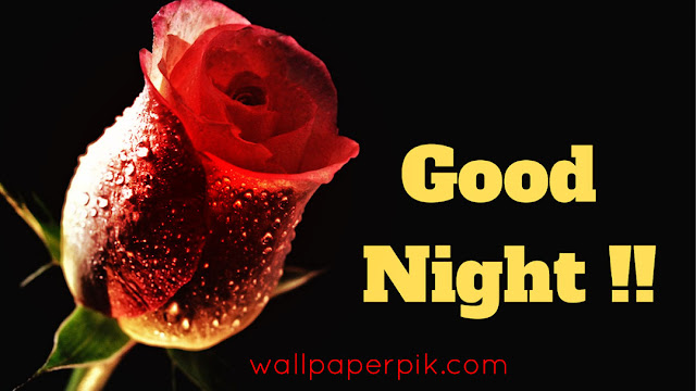 red rose good night images
