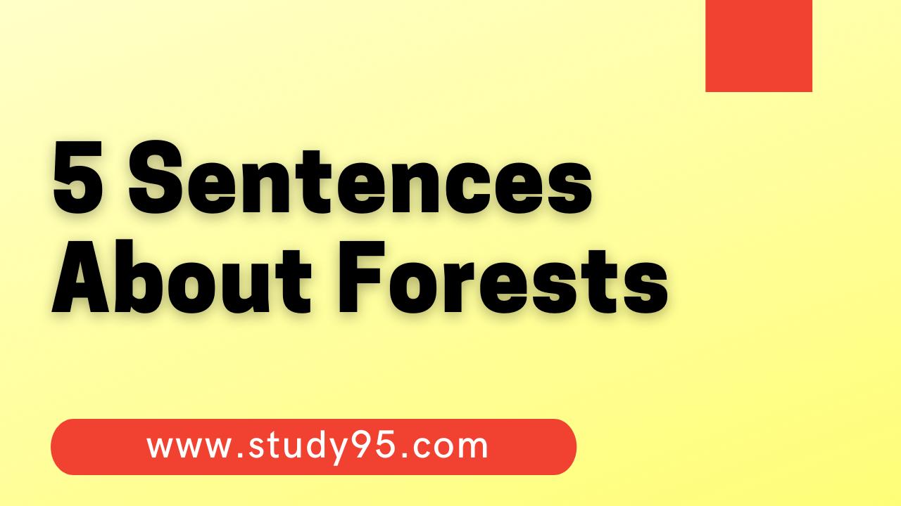 few Sentences About Forest