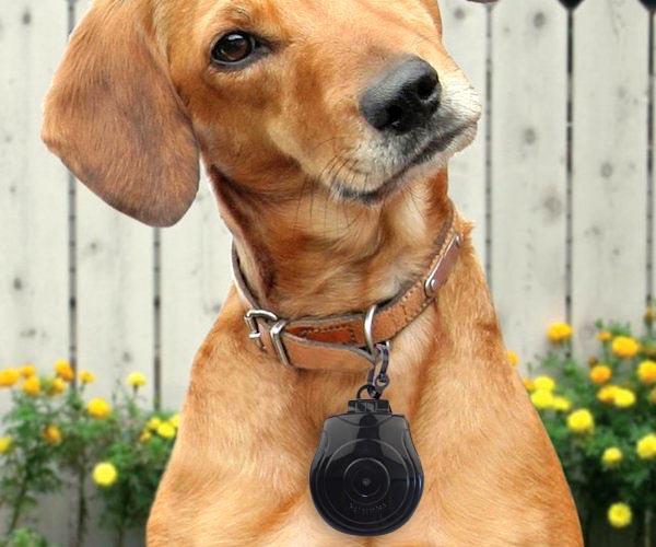 pet-collar-camera