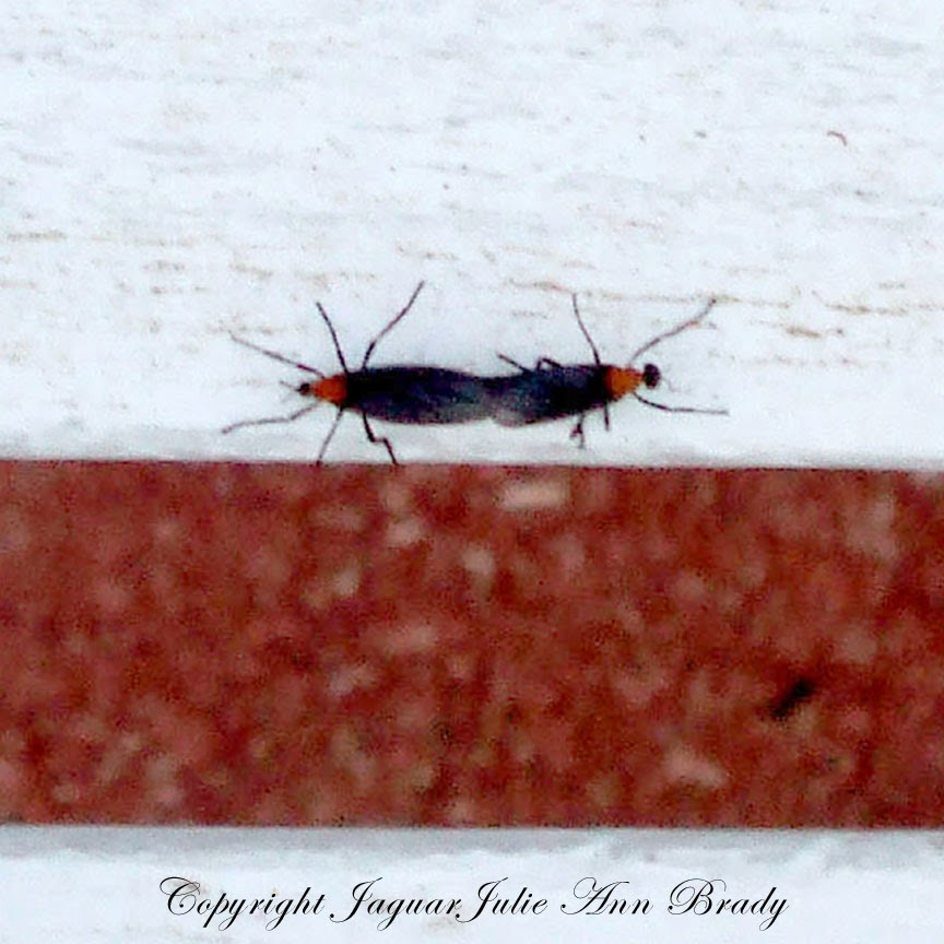 Two Love Bugs Making a Connection on a Bench by JaguarJulie