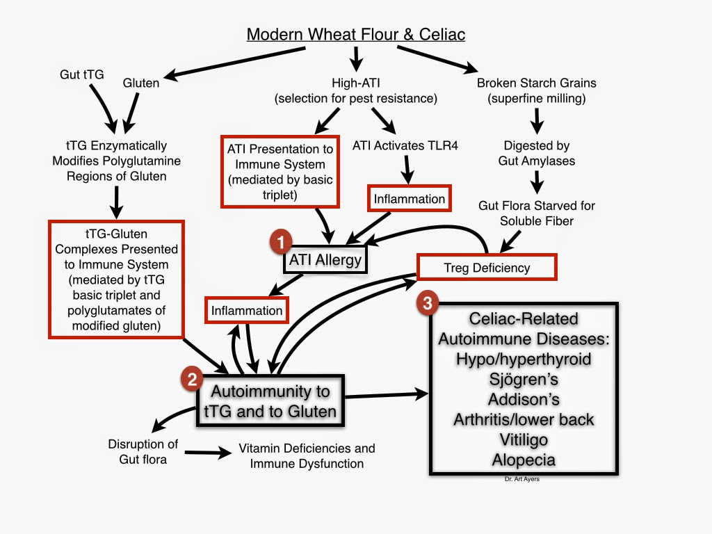 Cooling Inflammation: Celiac, Gluten and Trypsin Inhibitor