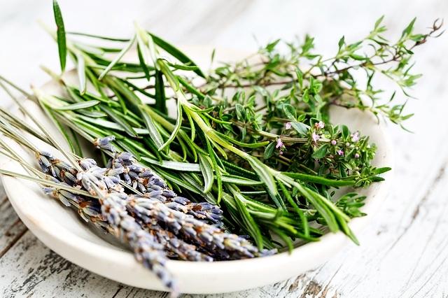 Guia das plantas medicinais na farmácia de casa