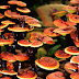 What Is Ganoderma? Discover The Truth Of A Nutritionist
