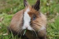 bisnis ternak kelinci, usaha ternak kelinci, biaya modal ternak kelinci, biaya ternak kelinci, modal ternak kelinci, ternak kelinci, kelinci, modal bisnis ternak kelinci, biaya bisnis ternak kelinci, hewan kelinci