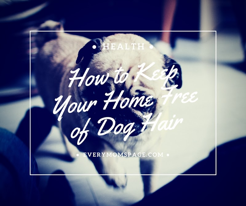How to Keep Your Home Free of Dog Hair