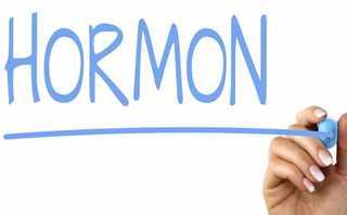 endokrin sistem hormonlar