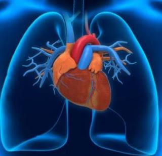 Tips Agar Jantung Anda Tetap Sehat dan Kuat