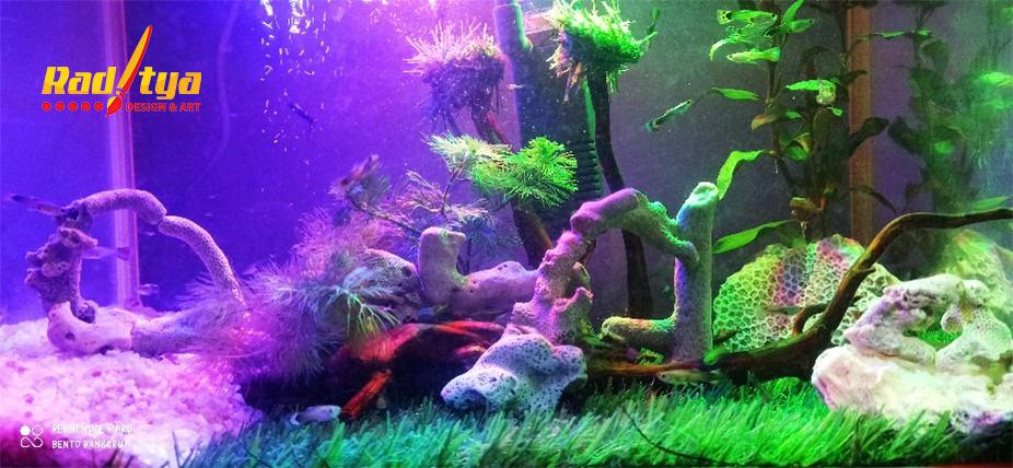 rumput aquascape