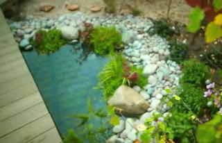 Boardwalk with pond